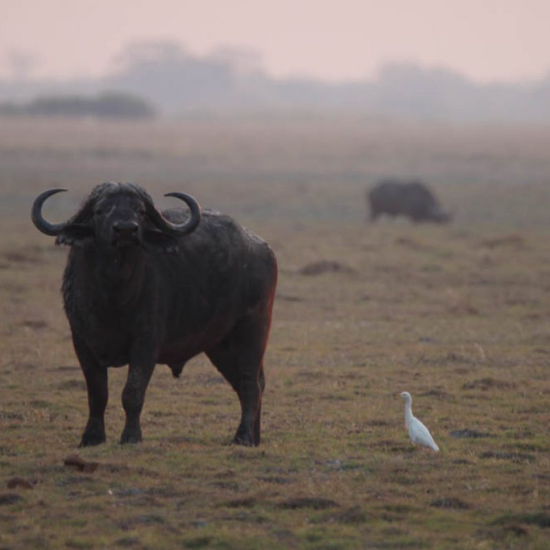 kowas-scenery-zambezi-namibia28
